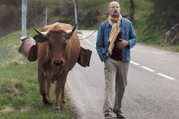 Nouveau film La Vache avec Jamel Debbouze le 17 février 2016 dans Films 2016